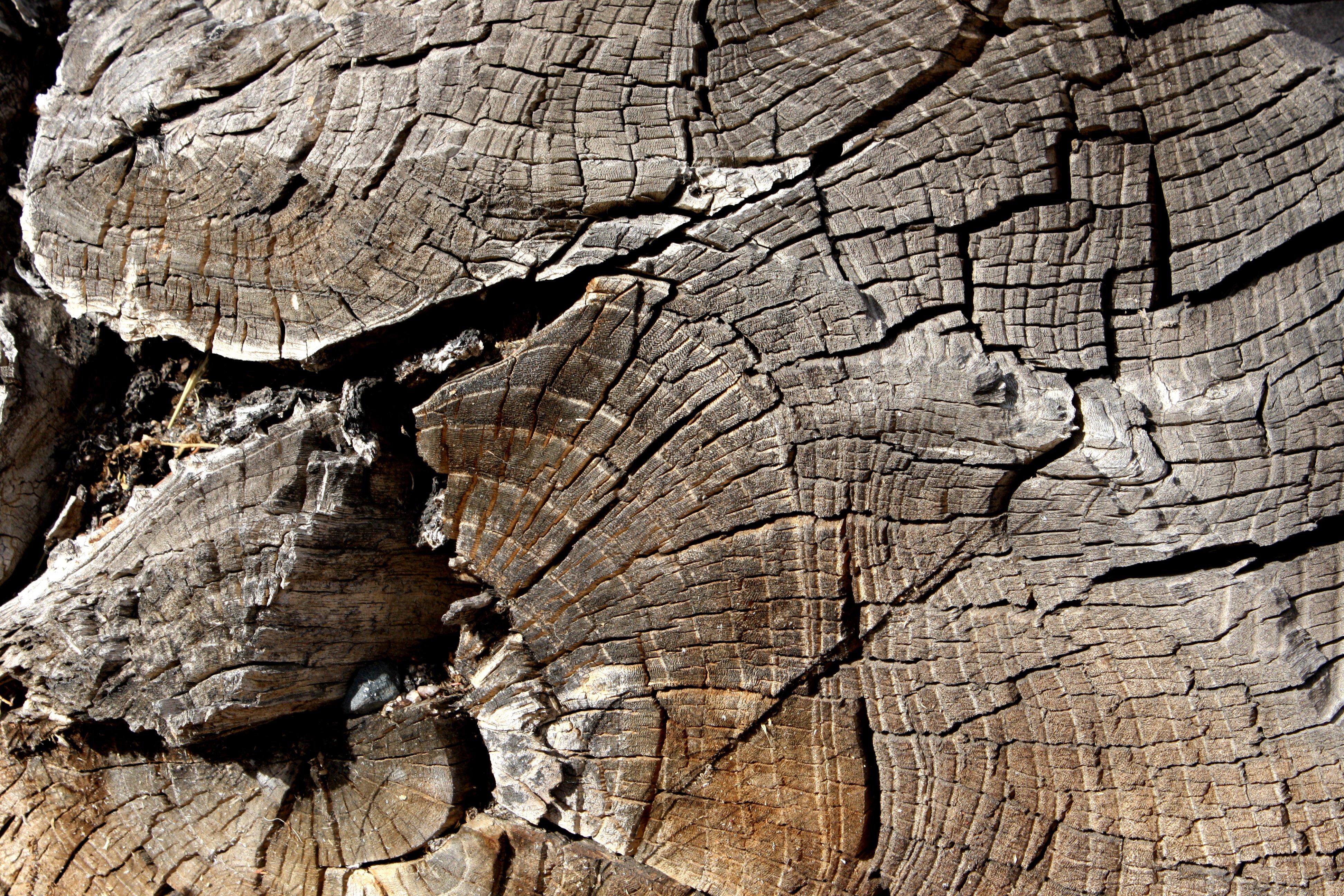 Log End Closeup Texture Picture Free Photograph Photos