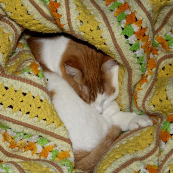 Orange and White Cat Sleeping in Yellow Blanket - Free High Resolution Photo