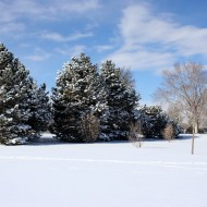 Snowy Winter Trees with Blue Sky - Free High Resolution Photo