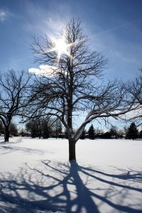Sun Through Winter Tree Branches - Free High Resolution Photo