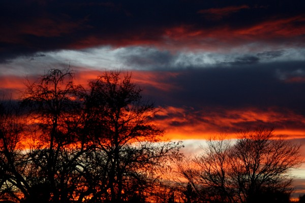 Sunset With Winter Trees Picture Free Photograph