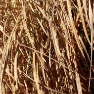 Photos Public Domain Free Photographs Pictures Clipart