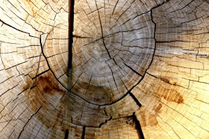 Tree Rings Texture - Free High Resolution Photo