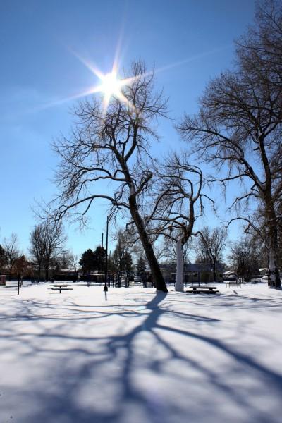 Winter Sun and Tree Shadows on Snow - Free High Resolution Photo