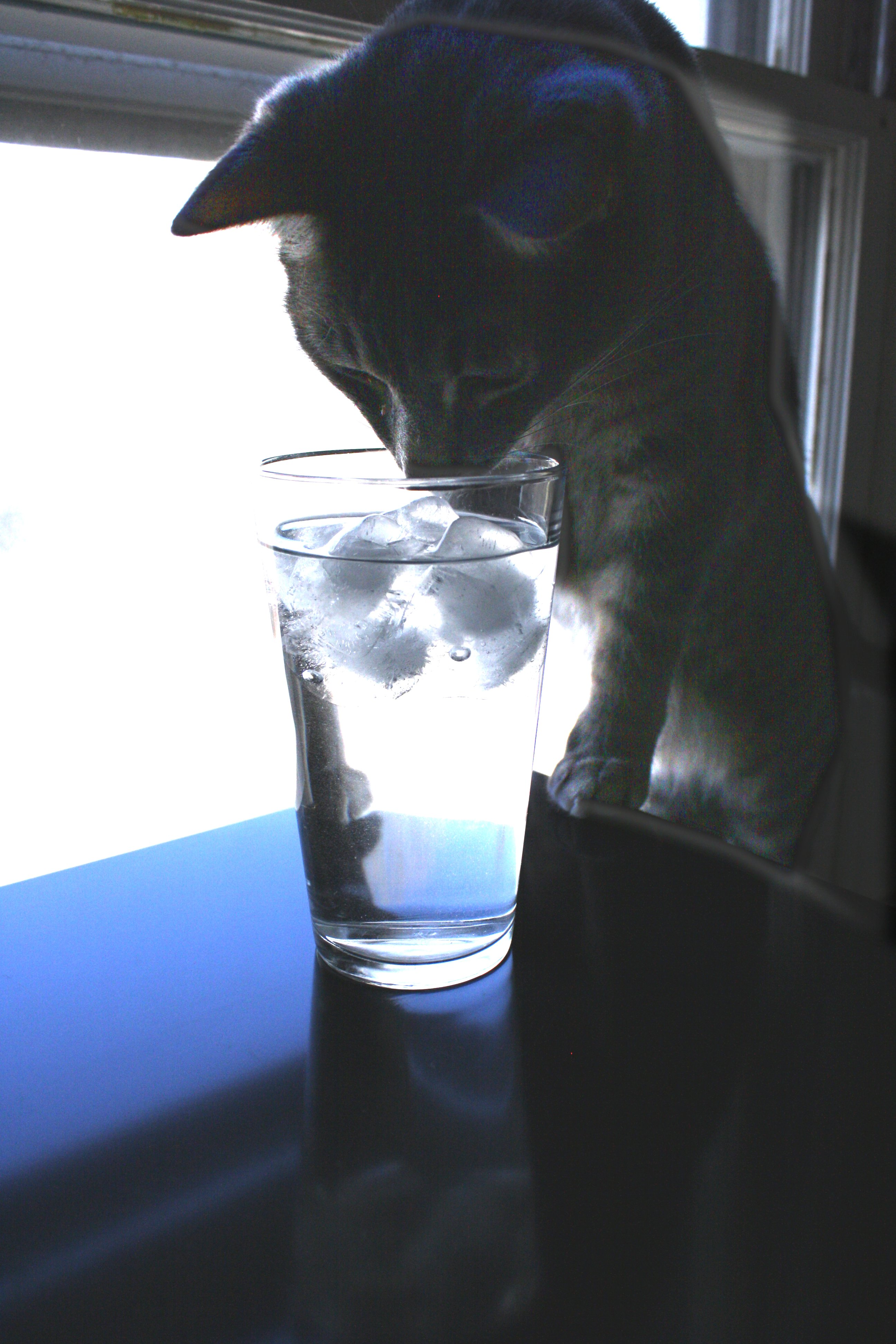 Cat Peering Into Glass Of Water Picture Free Photograph