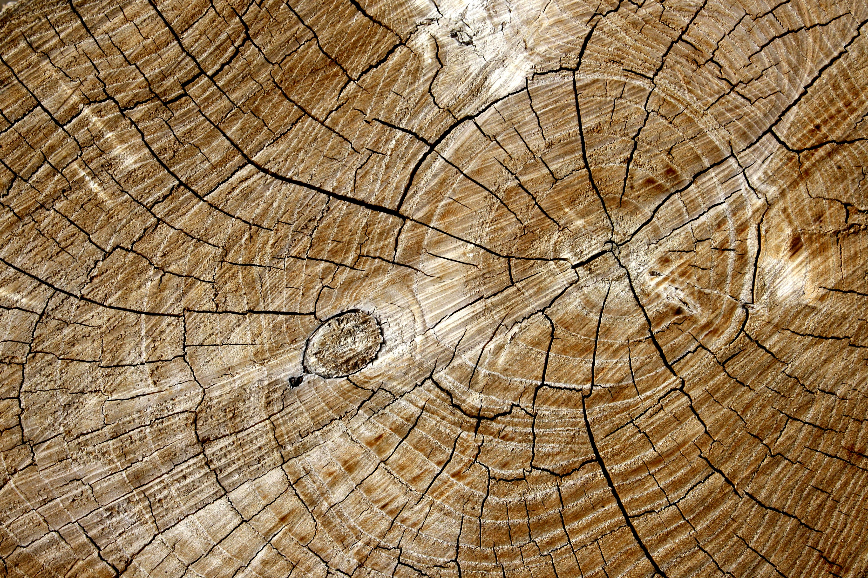 Cut End of Log with Tree Rings Texture - Free High Resolution Photo ...