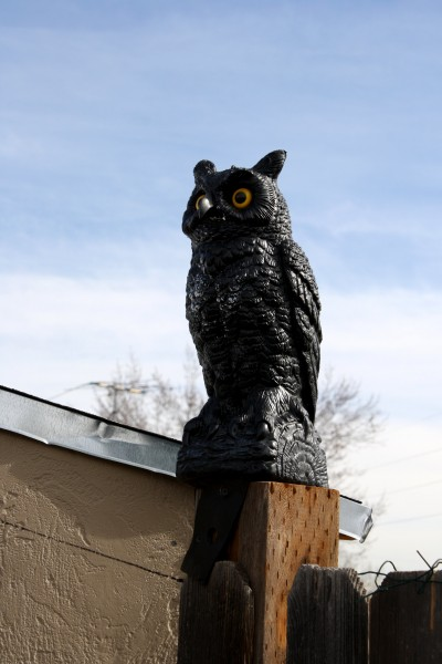 Owl Ornament on Fence Post - Free High Resolution Photo