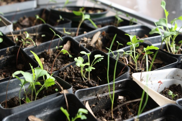 Seedlings Sprouting - Free High Resolution Photo