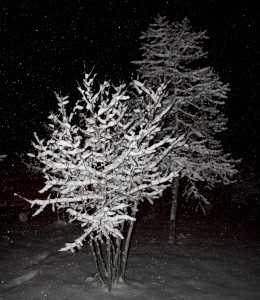 Snow Falling on Trees at Night - Free High Resolution Photo