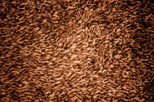 Brown Shag Carpeting Texture - Free High Resolution Photo