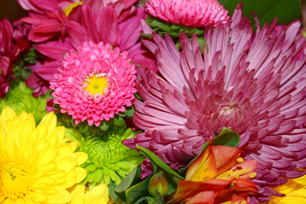 Colorful Flowers and Mums Bouquet Close Up - Free High Resolution Photo