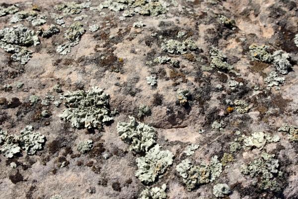 Lichen on Rock Texture - Free High Resolution Photo