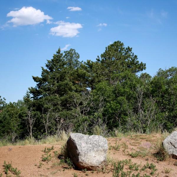 Mountain Pine Trees and Scrub Oak - Free High Resolution Photo