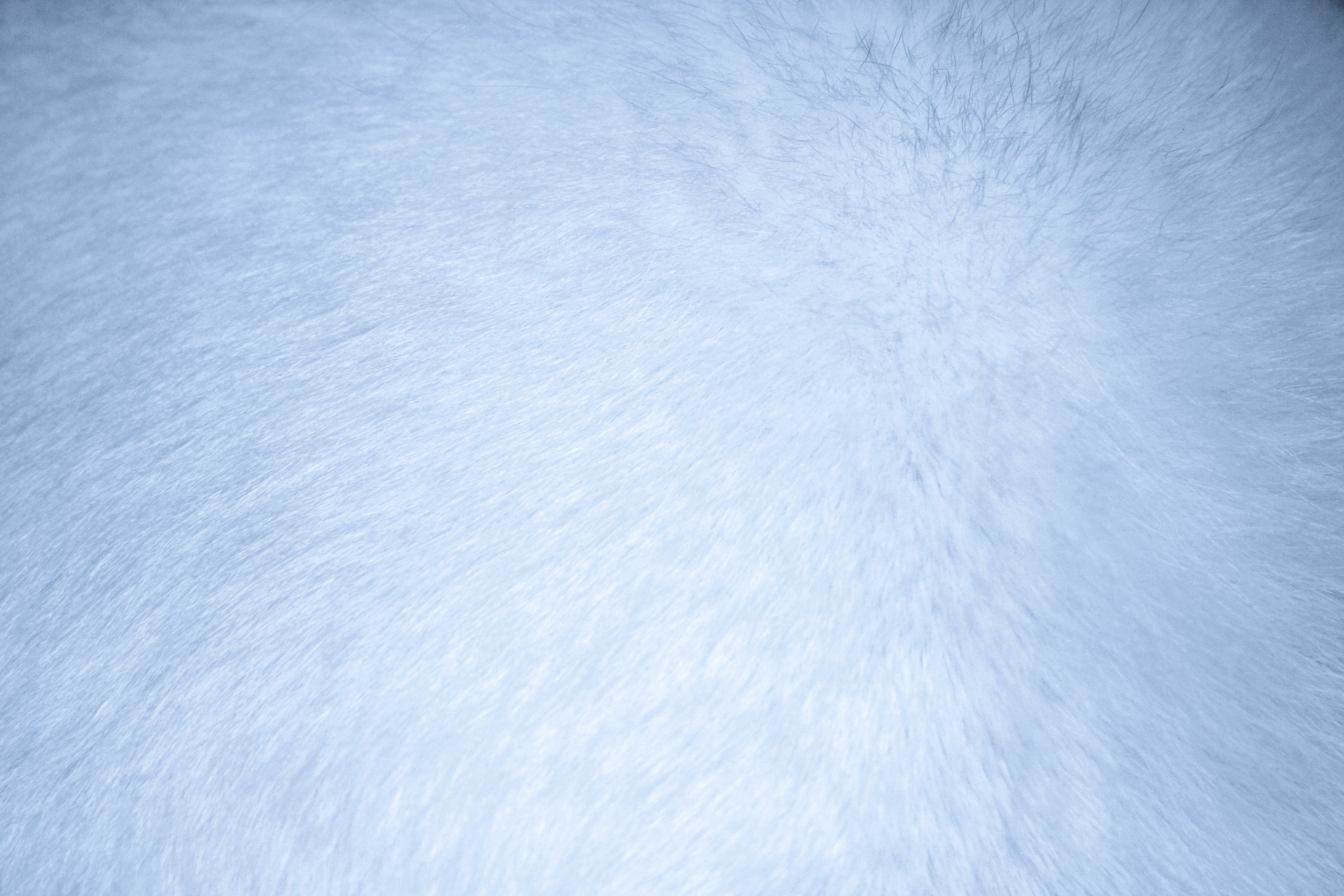 Baby Blue Fur Texture Picture Free Photograph Photos
