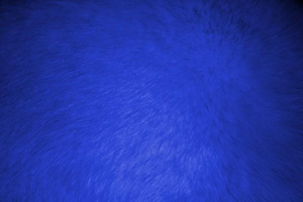 Blue Fur Texture - Free High Resolution Photo