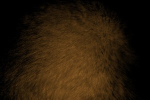 Brown Fur Texture - Free High Resolution Photo