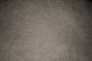 Gray Fur Texture - Free High Resolution Photo