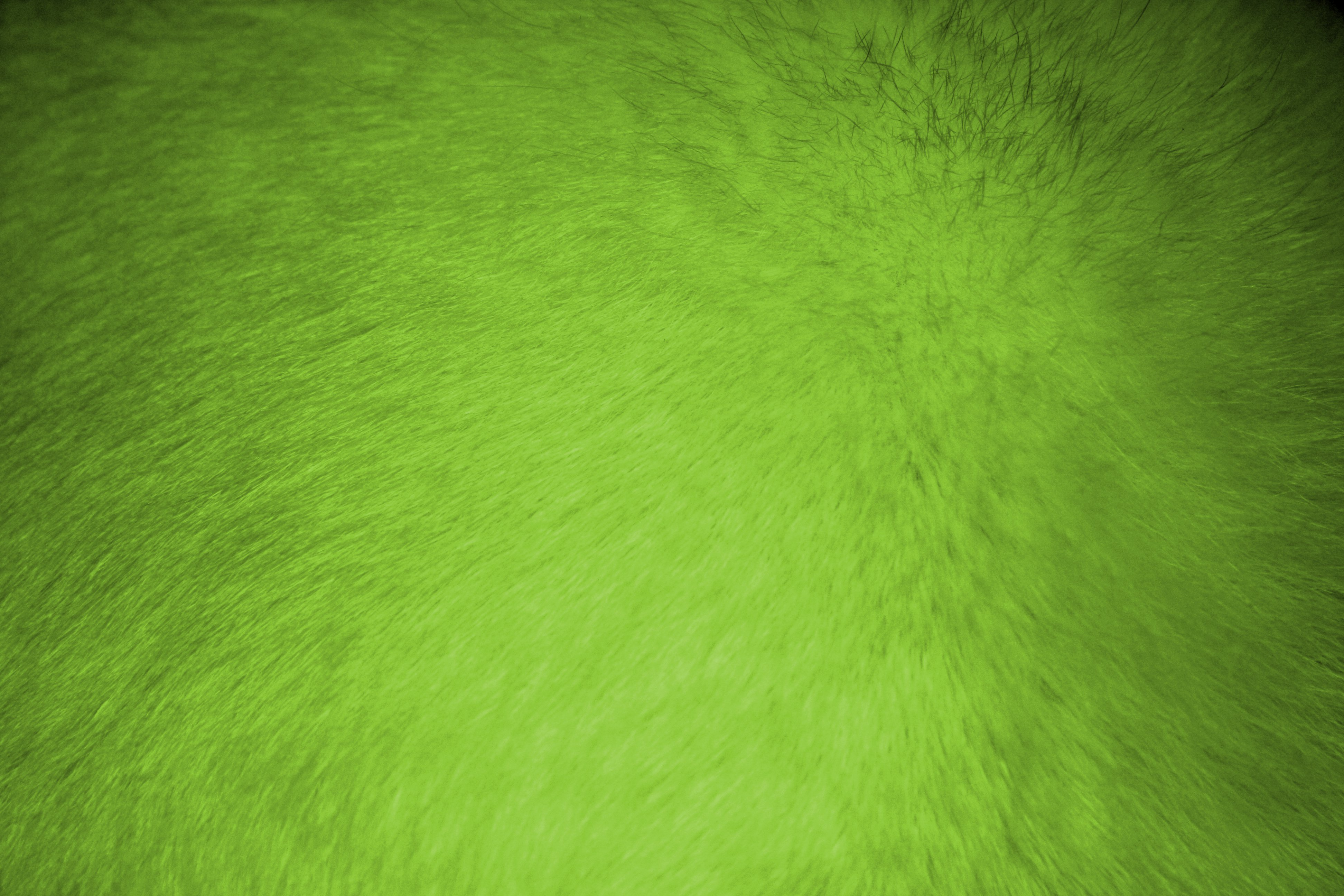 lime green fur texture picture