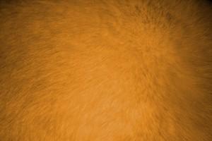 Orange Fur Texture - Free High Resolution Photo