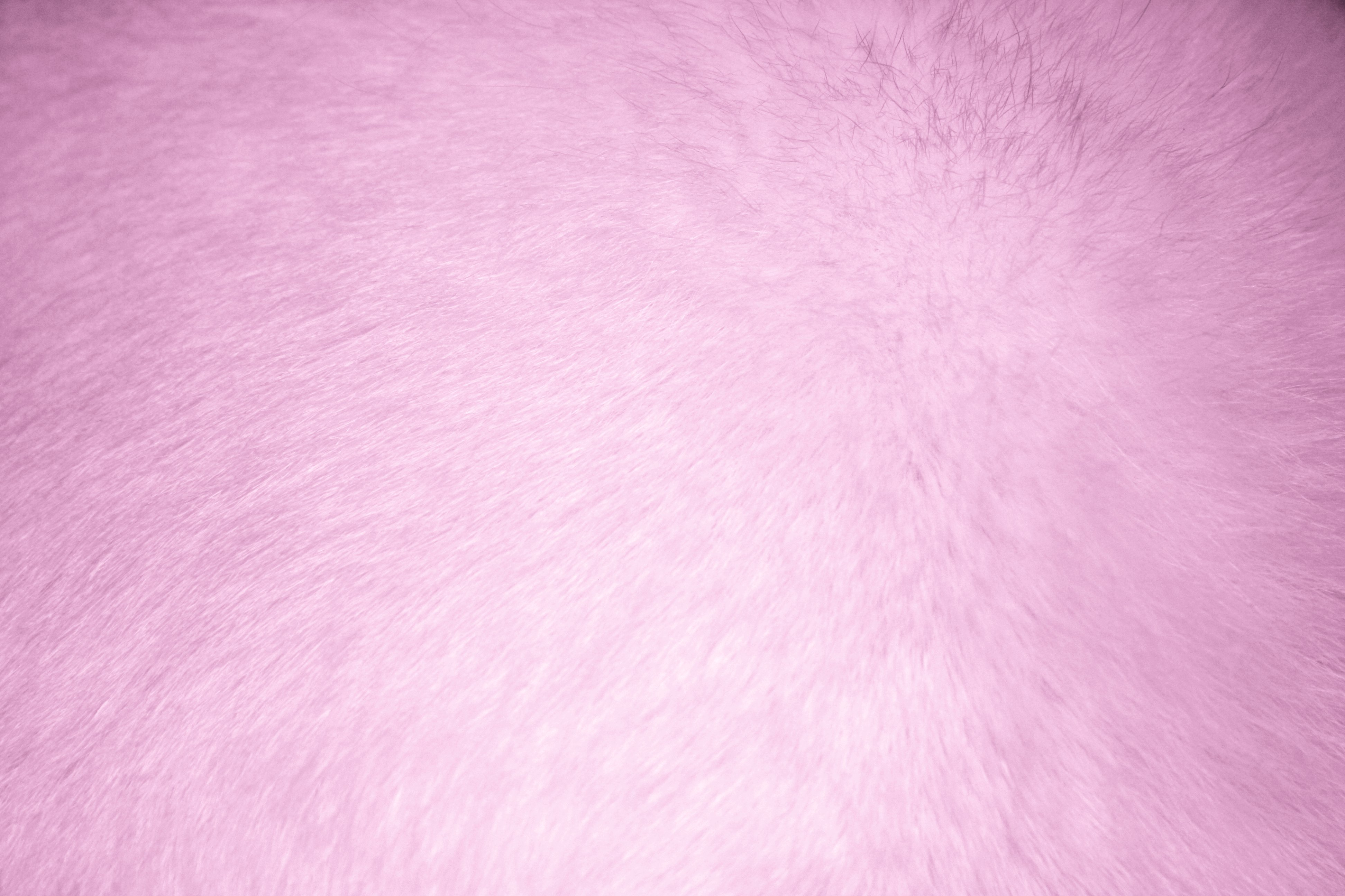 Pink fabric texture free high resolution photo dimensions 3888 - Pink Fur Texture