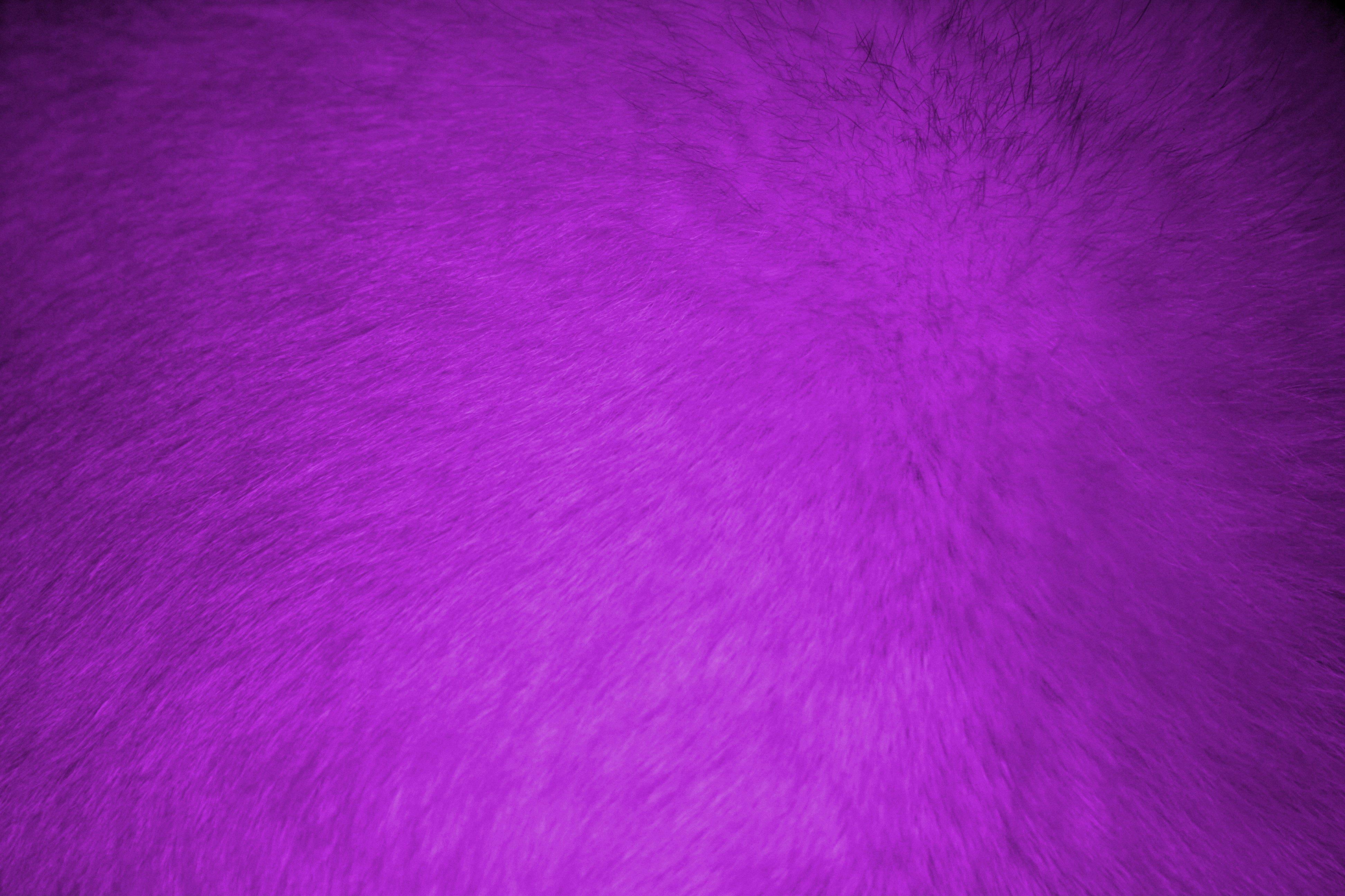 Purple Fur Texture Picture Free Photograph Photos