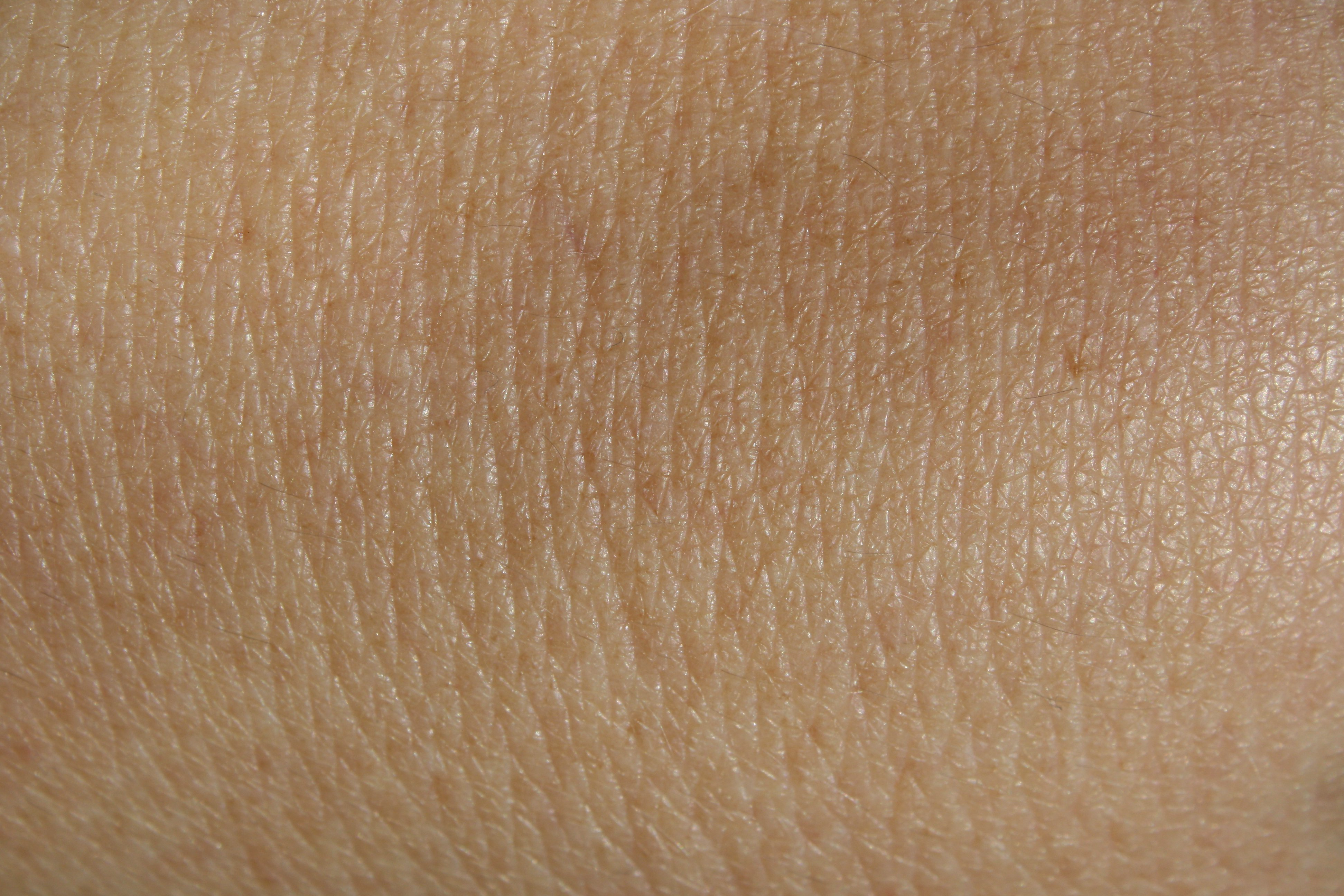Skin - Free high resolution photo of human skin - Dimensions  3888