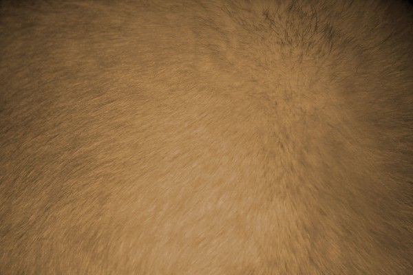 Tan or Light Brown Fur Texture - Free High Resolution Photo