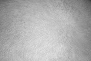 White Fur Texture - Free High Resolution Photo