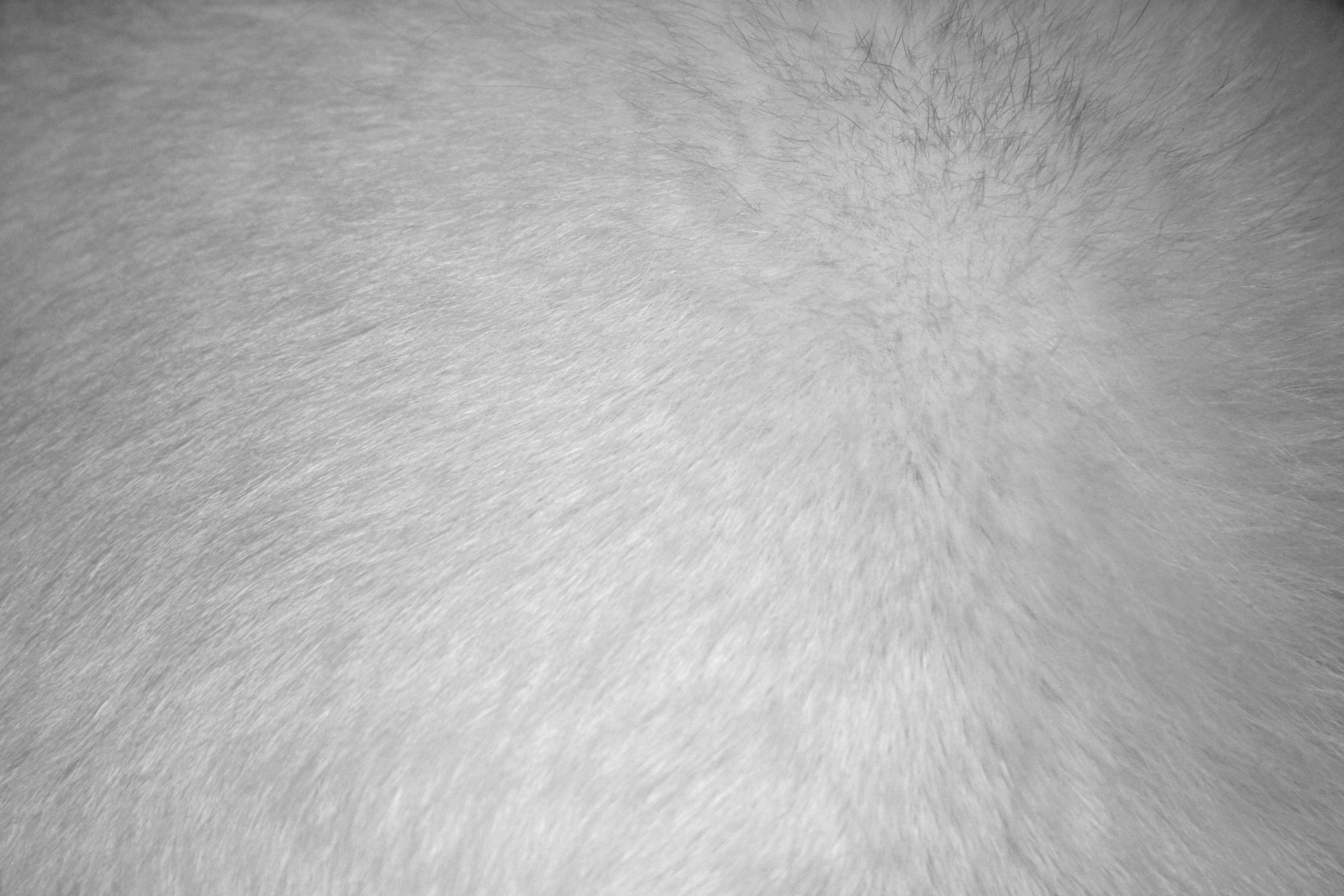 white fur texture picture free photograph photos