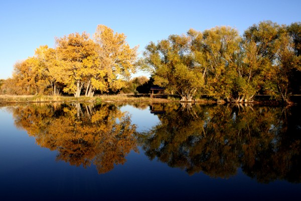 Autumn Trees Reflected in Lake - Free High Resolution Photo