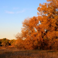 Beautiful Autumn Day - Free High Resolution Photo