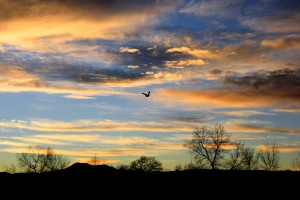 Bird Flying at Sunset - Free High Resolution Photo