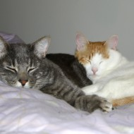 Cuddling Cats - Free High Resolution Photo