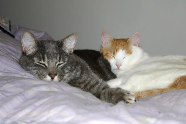 Cuddling Cats - Free High Resolution Photo