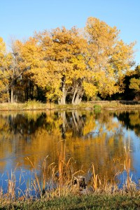 Fall Colors Reflected in Water - Free High Resolution Photo