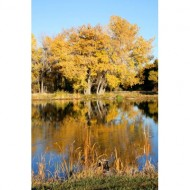fall-colors-reflected-in-water-thumbnail