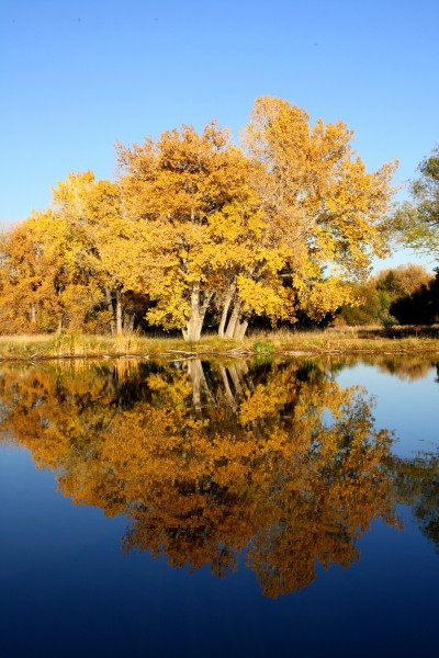 Fall Trees by Lake - Free High Resolution Photo