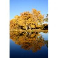 fall-trees-by-lake-thumbnail