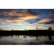 geese-flying-over-lake-at-sunset-thumbnail