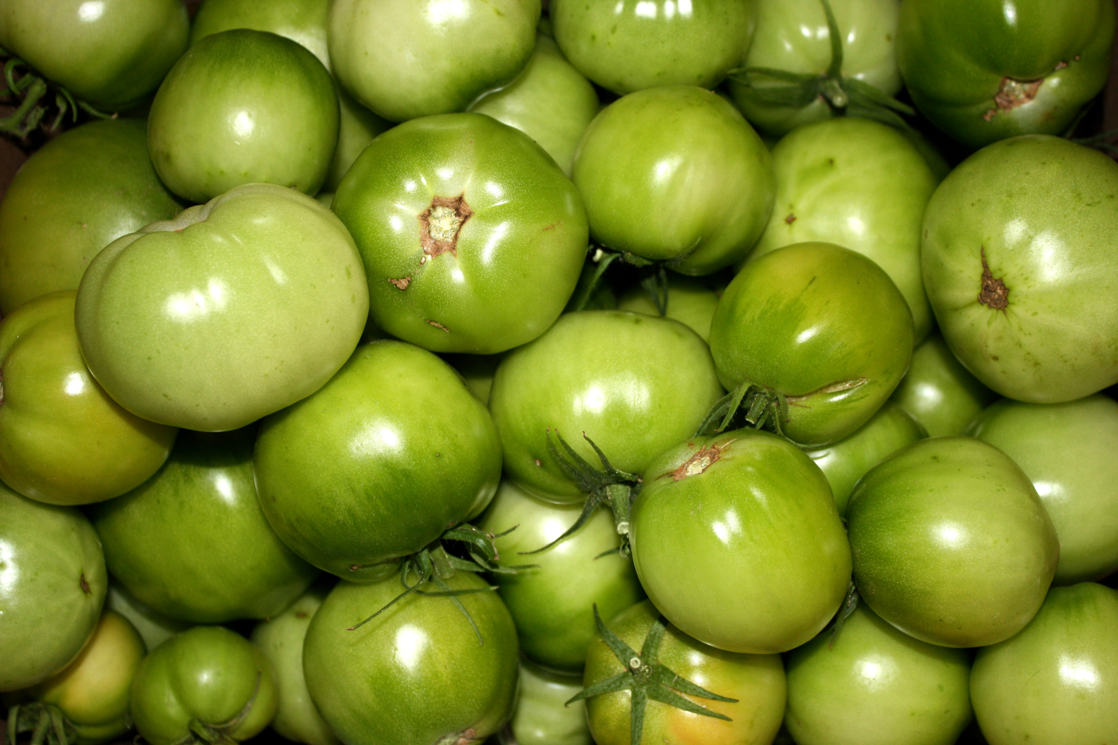 Green Tomatoes Picture Free Photograph Photos Public