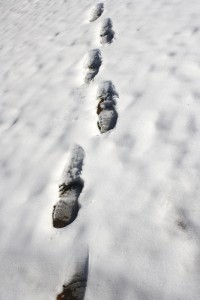 Trail of Footprints in Snow - Free High Resolution Photo