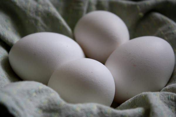 Four White Eggs - Free High Resolution Photo