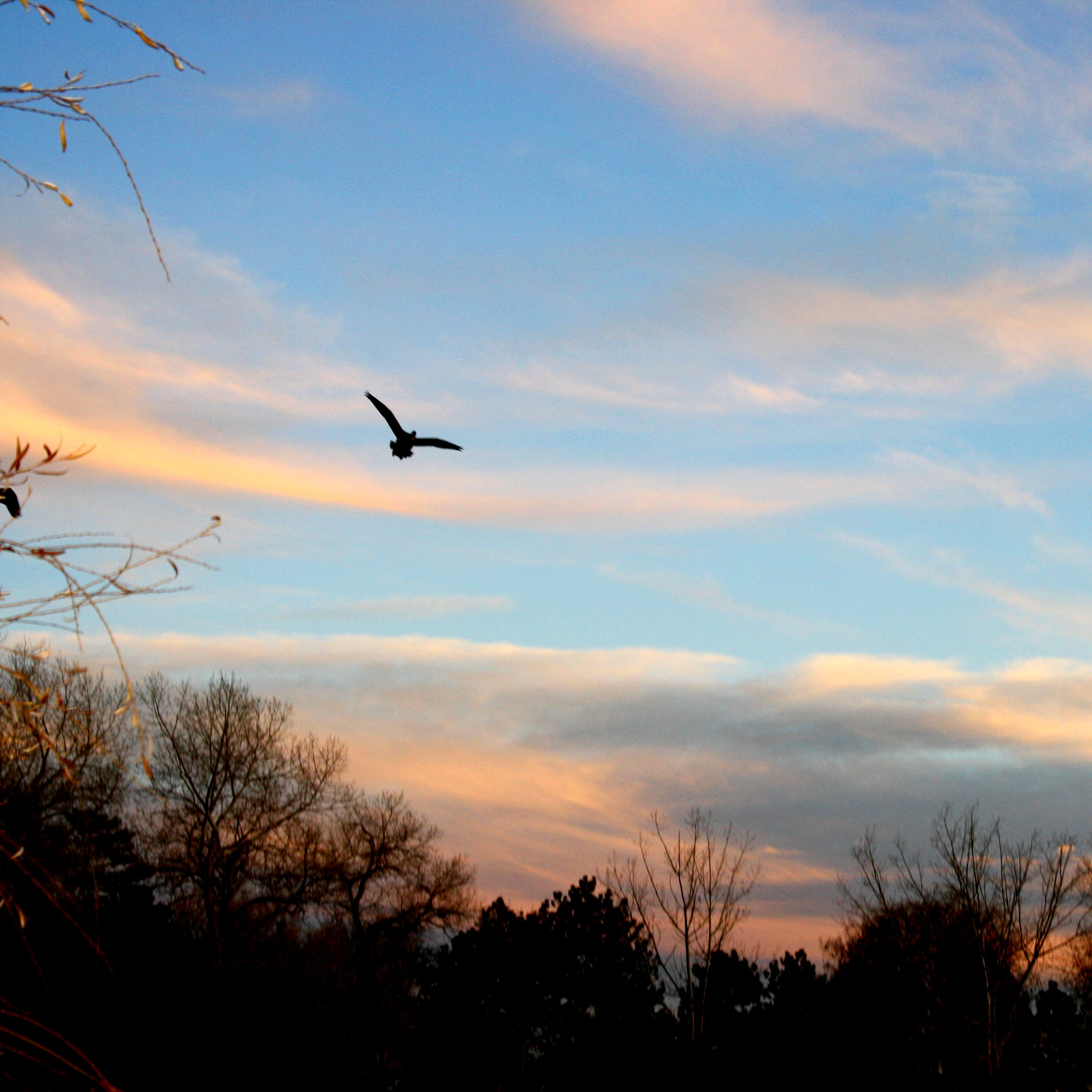Flying Bird At Sunset