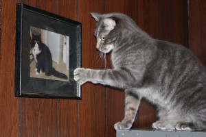Cat Pawing at Framed Photo of Another Cat - Free High Resolution Funny Photo
