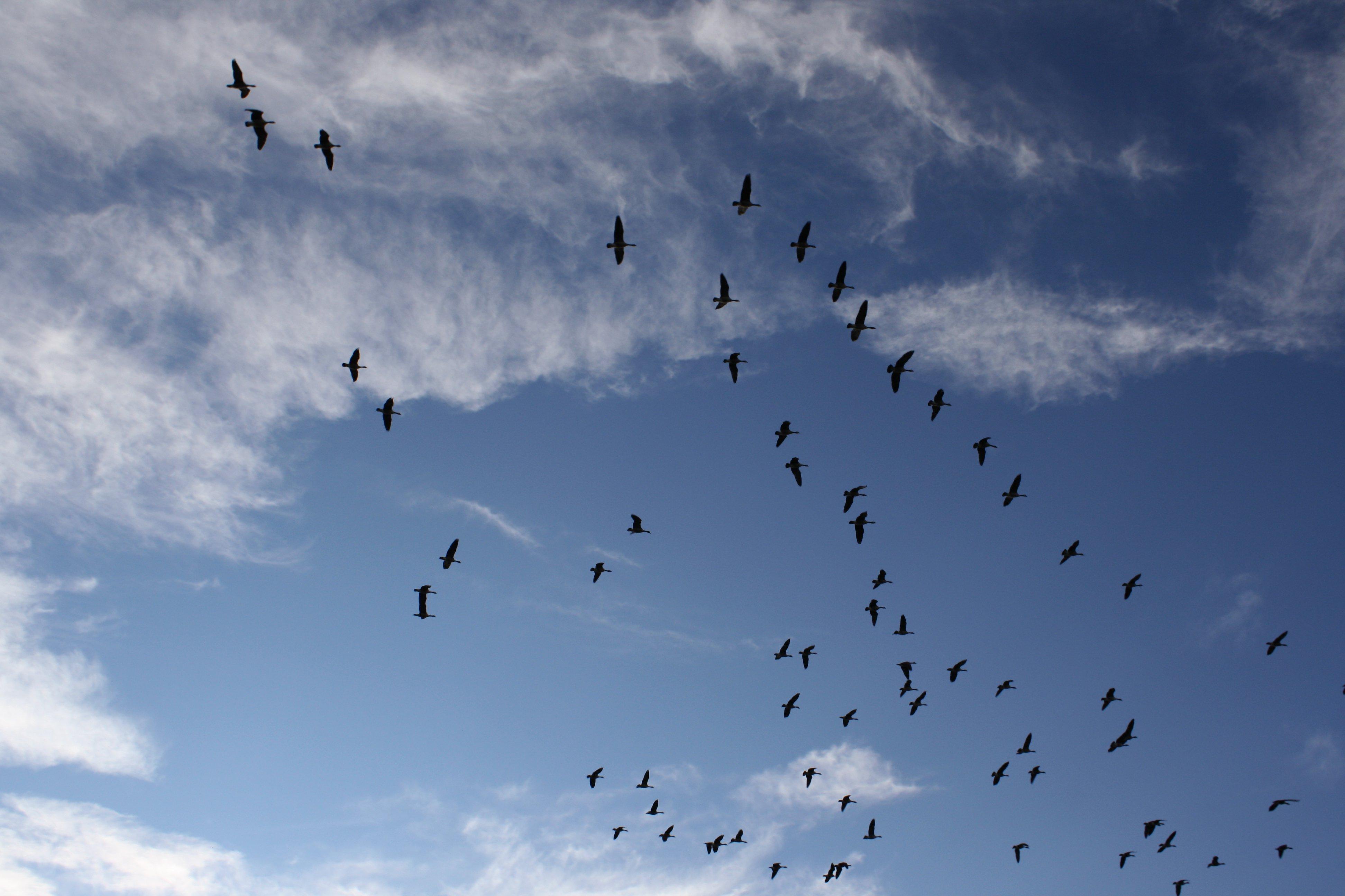 Birds flying in the sky - photo#6