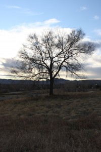 Leafless Tree - Free High Resolution Photo