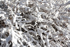 Snow Coated Branches Texture - Free High Resolution Photo