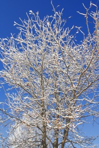 Snow Coated Winter Tree Branches - Free High Resolution Photo