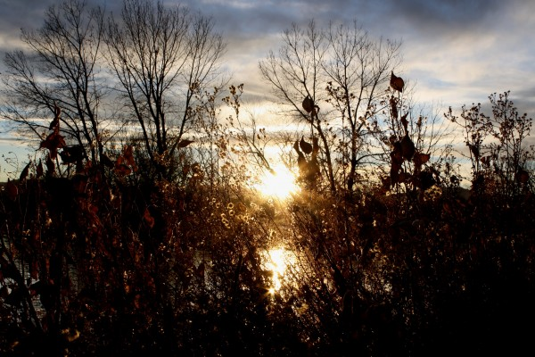 Sun Through Fall Foliage - Free High Resolution Photo