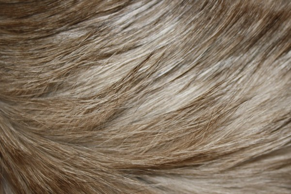 Long Haired Cat Fur Texture - Free High Resolution Photo